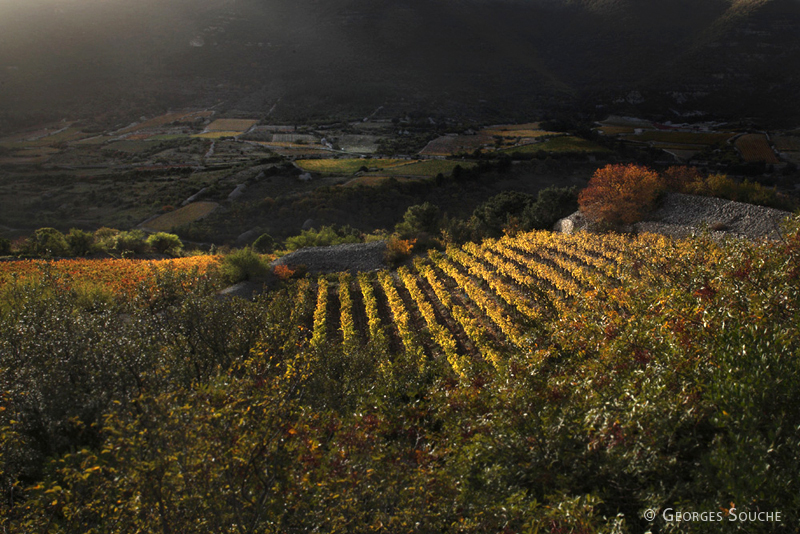 Terrasses du Larzac, terroir de l'Escalette