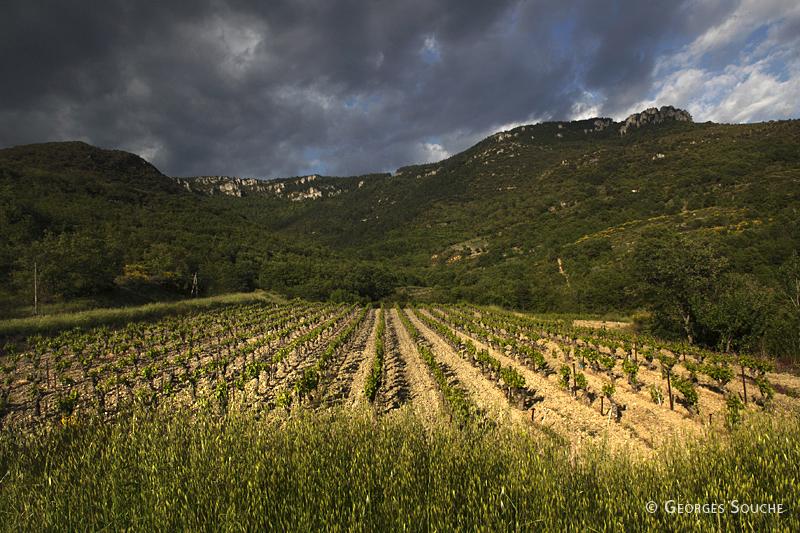 Une vigne au pied du causse, Terrasses du Larzac