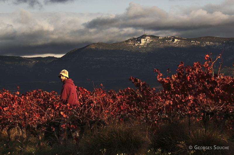 Vallée de l'Hérault, novembre 2010