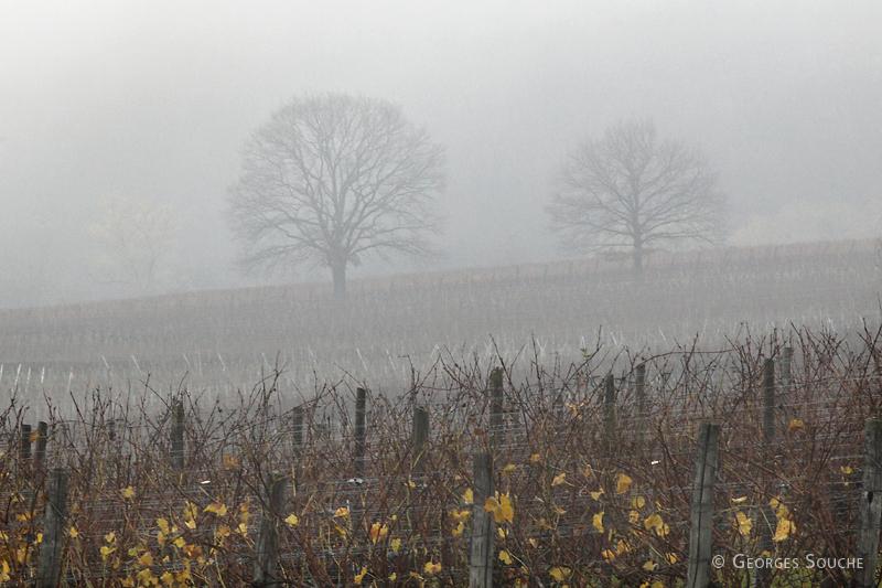 Alsace, novembre 2010