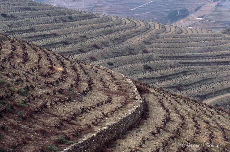 Vignoble de Banyuls, P.O, 2004