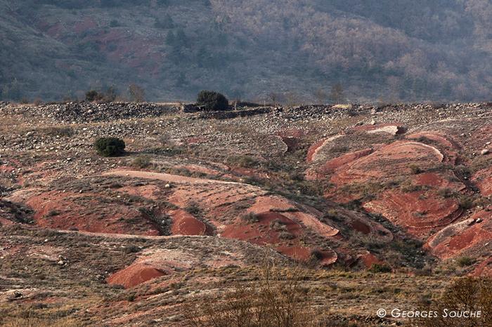 Ruffes de Malavieille, vallée du Salagou, février 2012