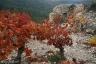 Escalette, automne #6, Terrasses du Larzac
