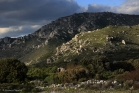 Monts de Saint Guilhem