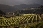 Vignoble de Roquebrun