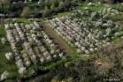 Cerisiers, Vallée du Jaur