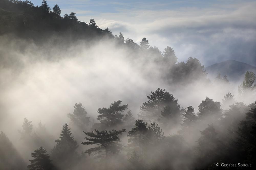 Haut-Languedoc 2014