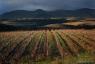 Vignoble de Faugères