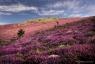 Lande à bruyère, Caroux-Espinouse