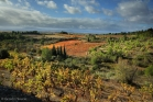 Vignes et garrigue près de La Livinière