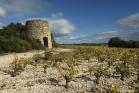 Saint-Jean de Minervois, vigne et ancien moulin