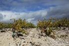 Terroir calcaire, vignoble de Saint-Jean de Minervois