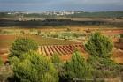 Le vignoble entre Montouliers et Quarante