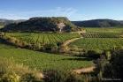 Roquessels, vignoble de Faugères
