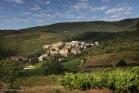 Vignoble de Faugères (La Liquière) (1309181469)