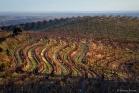 Vignoble de Faugères (1311304141)