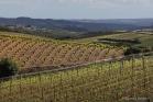 Vignoble de Faugères (1604303546)