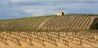 Vignoble de Faugères (1604303554)