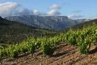 Vignoble de Berlou