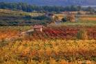 Vignoble de Faugères (GVF0018)
