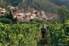 Saint-Chinian / Roquebrun  (GVR0007)