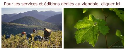 encart-vigne