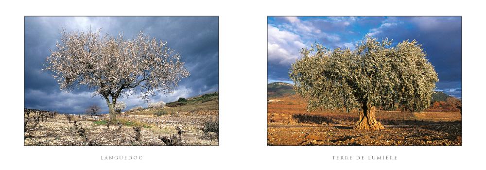 Réf. : L.50 - Amandier et olivier - Carte double