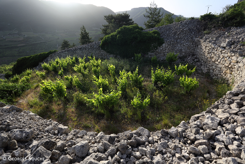 Terrasses du Larzac