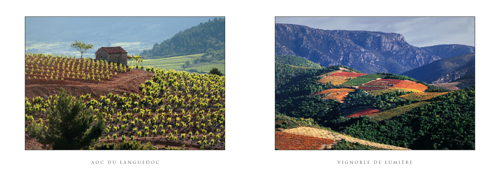 Réf. : L.62 - Carte double - AOC du Languedoc