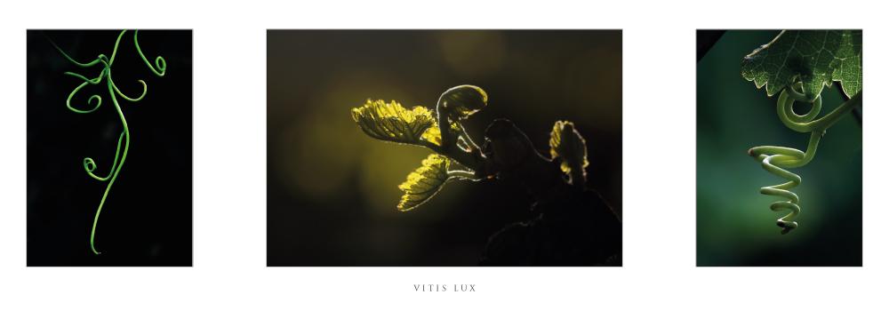 Réf. F.11 - VITIS LUX - Carte en triptyque
