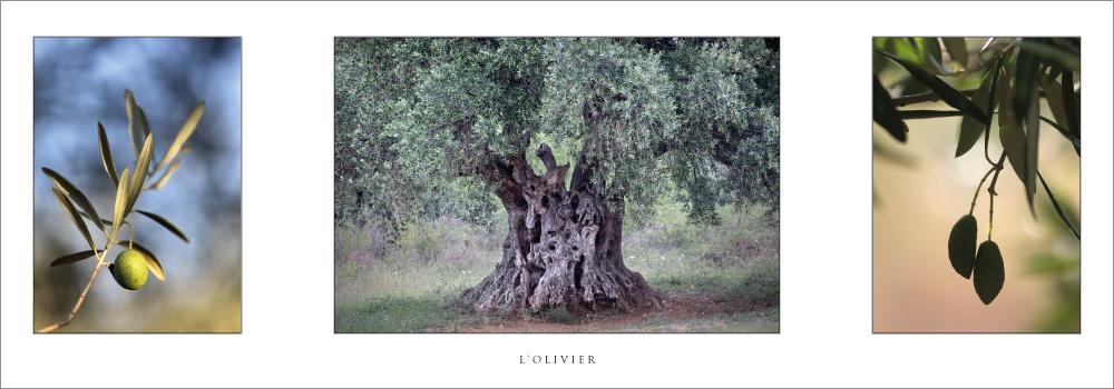 Réf. : L.69 - L'olivier - Carte en triptyque